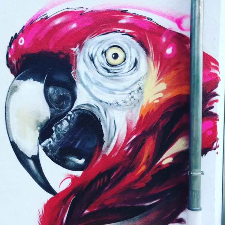 Graffitikuenstler, Graffitiauftrag, Artmos4, Tierschutzverein, Offenbach, Papagei, Tier, Fotorealistisch